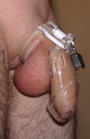 Figure 1. A penis in a plastic cock cage. Note how the assembly is held in place by the locked ring around the base of the penis between the testicles and the body
